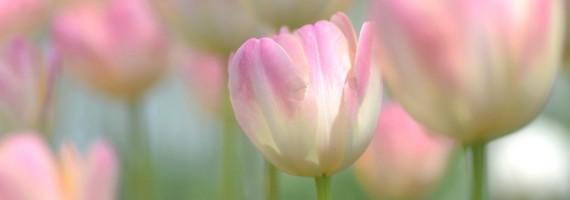 sherwood-florist-havant-spring3